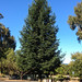 Sharon Park - Menlo Park, CA