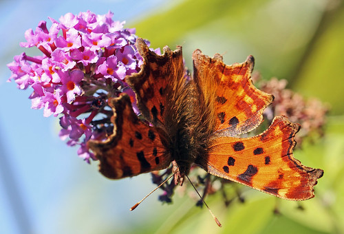 The Tale Of The Uncooperative Comma | by alphazeta