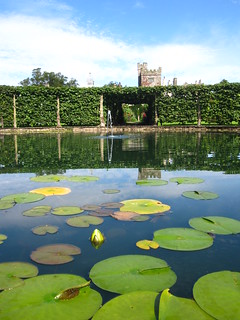 Pond and Waterlilies, Levens Hall | by John of Witney