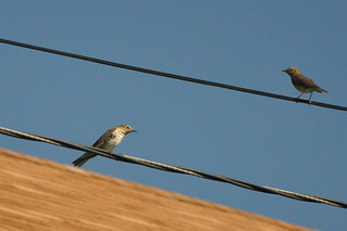 two on the wires | by christiaan_25