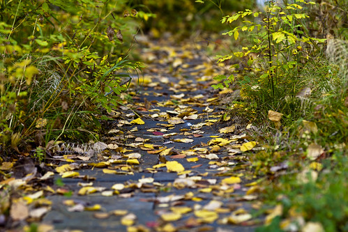 Path to the autumn | by Valery Chernodedov