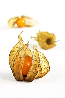 [physalis low res] | by RHiNO NEAL