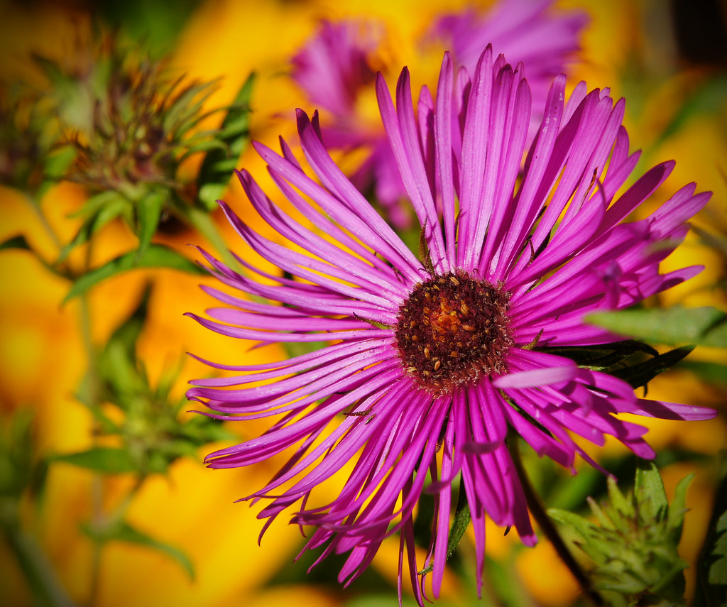 A Riot Of Color In The Carl S English Jr Botanical Garde Flickr