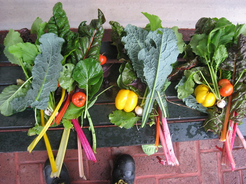 Children's Garden Harvest | by Brooklyn Botanic Garden