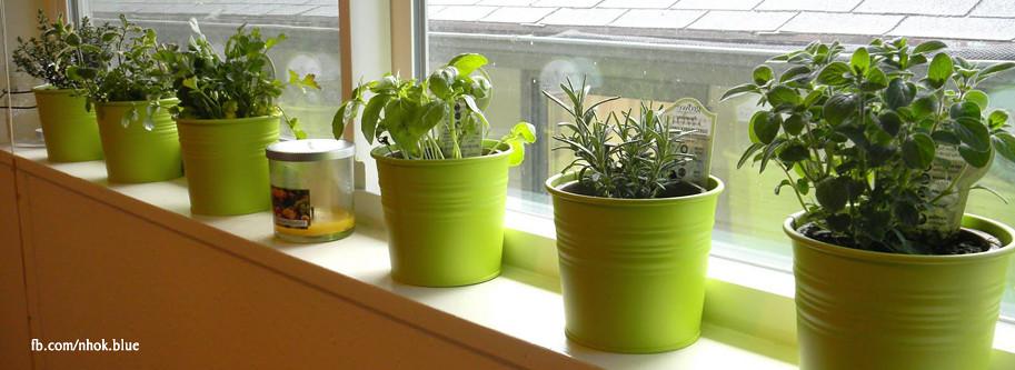 Windowsill Herb Garden Nh0k Blu3 Flickr