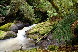 Toorongo River | by phunnyfotos