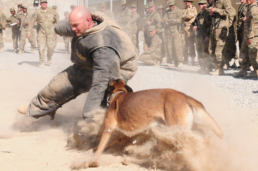 Image Result For Dog Training Mobile