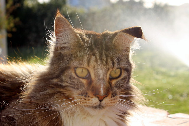 Cat S Best  Ef Bf Bdko Plus Entsorgung