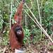 Orangutan World, Tanjung Puting Borneo Adventure-101.jpg