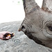 Black rhino 11