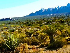 Cutouts of the Mojave Desert