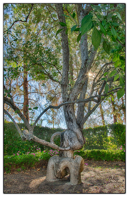 Gilroy Gardens Circus Tree Curves Flickr Photo Sharing