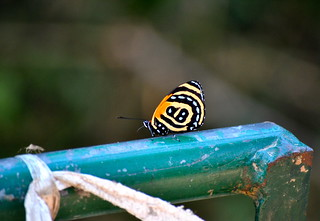 Resting Butterfly | by Bryden McGrath