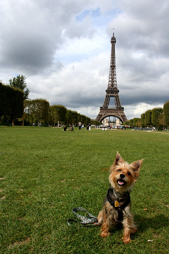 dog at the Eiffel Tower