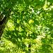 Image ID# Whalen-120911-1921   Hedgehog Brook Trail Four