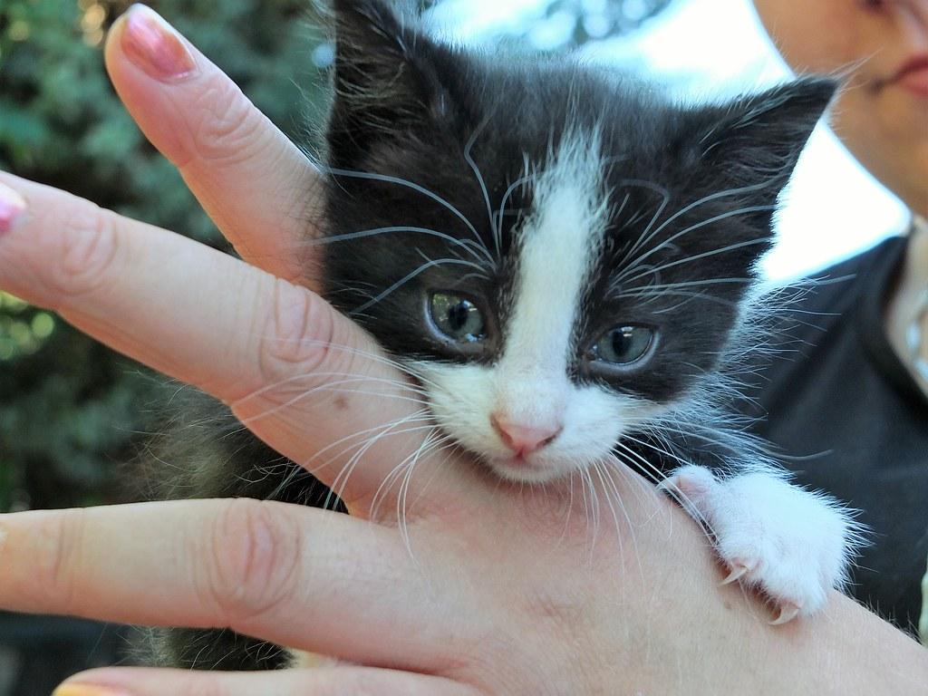 junge katze neugierig aufs leben eine katze vom. Black Bedroom Furniture Sets. Home Design Ideas