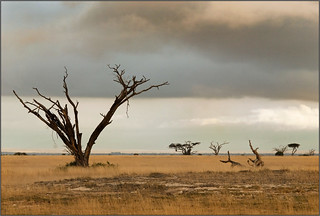 Africa || Desolation | by Jose Antonio Pascoalinho