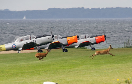 Runway incursions - IMG_0668a | by Alfs photodiary