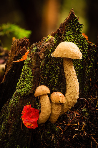 Autumn Shrooms | by Tom Whitney Photography