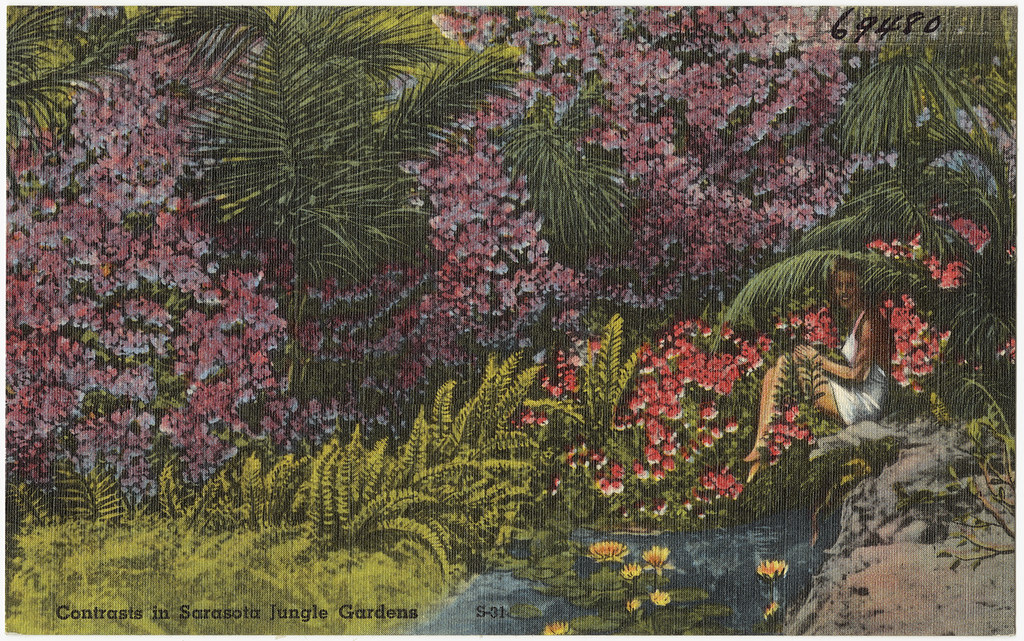 Contrasts In Sarasota Jungle Gardens File Name 06 10