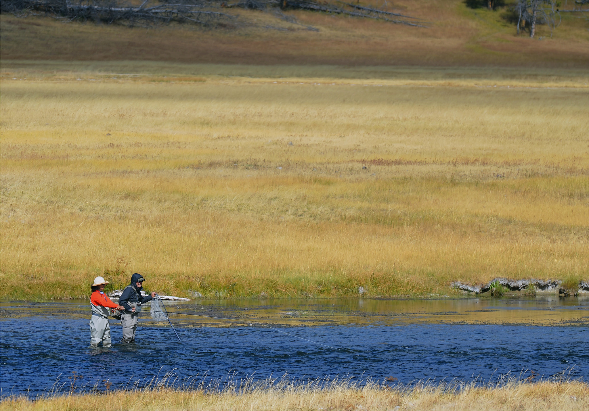 Fly fishing in yellowstone national park and so it begins for Yellowstone national park fishing