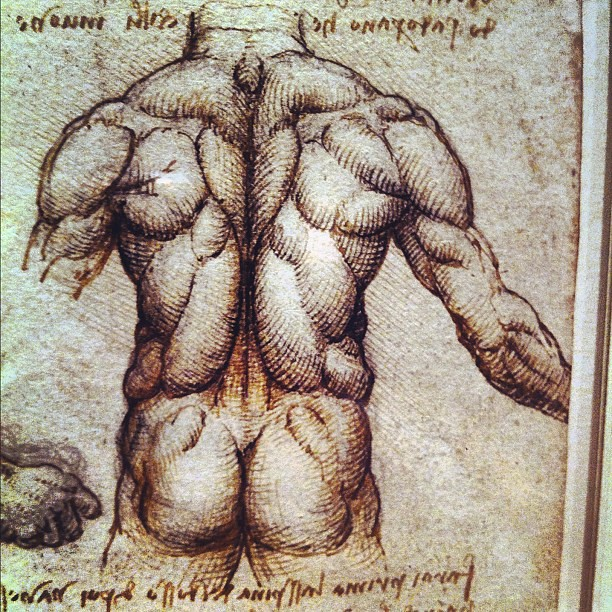 Leonardo Da Vinci anatomy drawing museum tour - the 100yo … | Flickr