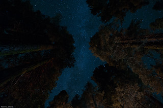 Stars between the trees | by ChewDawg