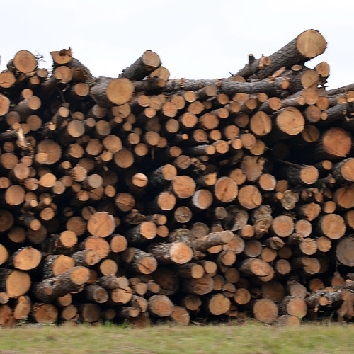 Logs | by springtree road