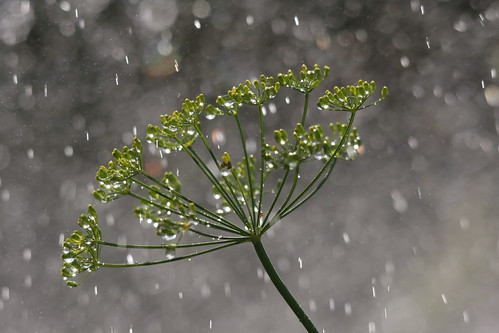 dill-drops | by JeremyOK
