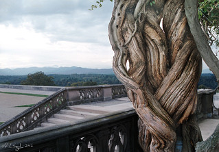 Biltmore Vines | by rjseg1