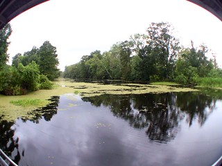 The Jean Lafitte Swamp Tour in Marrero, LA (8-24-12) Photo #19 | by 54StorminWillyGJ54