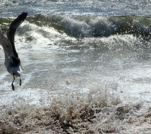 Wave hitting Seagull | by hollykoffler