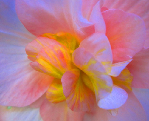 Macro colours to share for your week ahead! | by Bionic Rhonda, back slowly