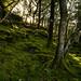Rhinog Fawr Woods (5 of 9)