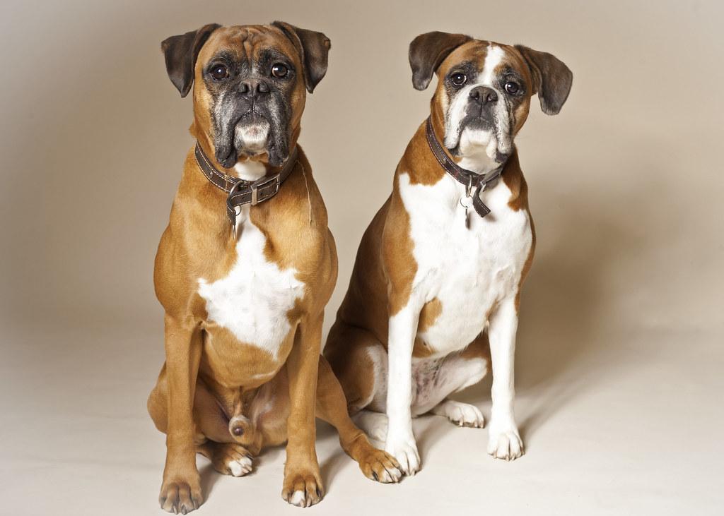 Image Result For Best Senior Dog