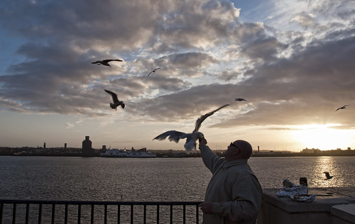 Feeding Seagulls in Liverpool | by neilalderney123