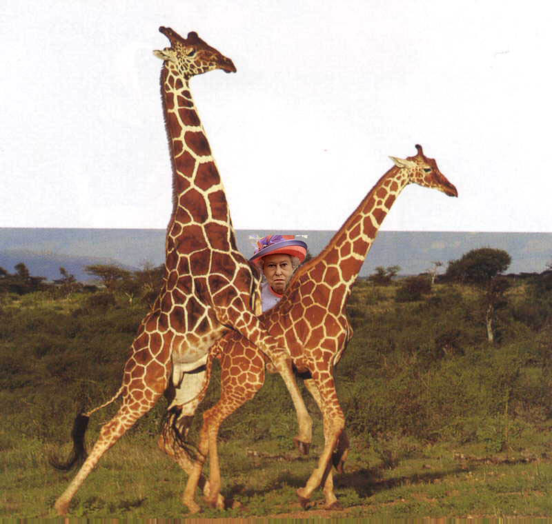 Жирафов фото ёбля