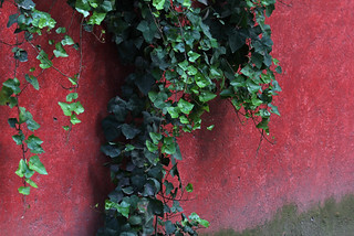 Red Wall | by Geninne