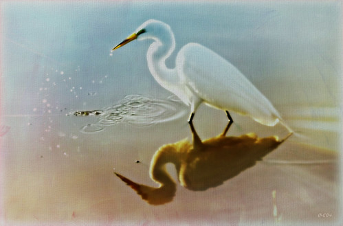 Egret in Pastel | by Chris C. Crowley