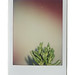 plants_instax
