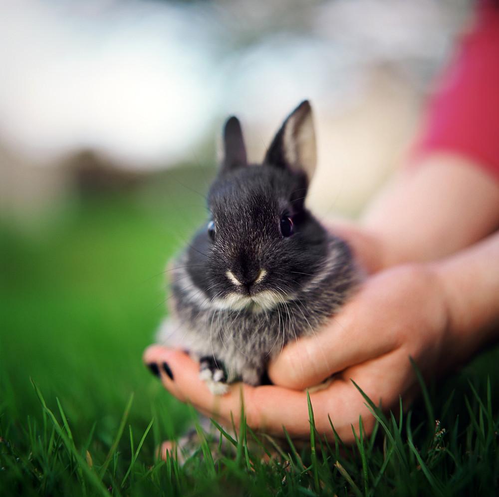 some bunny loves you backyard bunnies hasselblad study 3 u2026 flickr