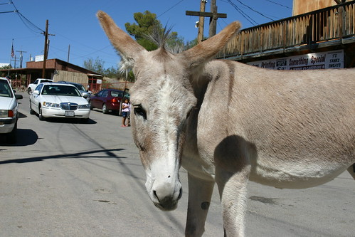 Thou Shalt Not Pass, Oatman, Arizona | by SpixPix