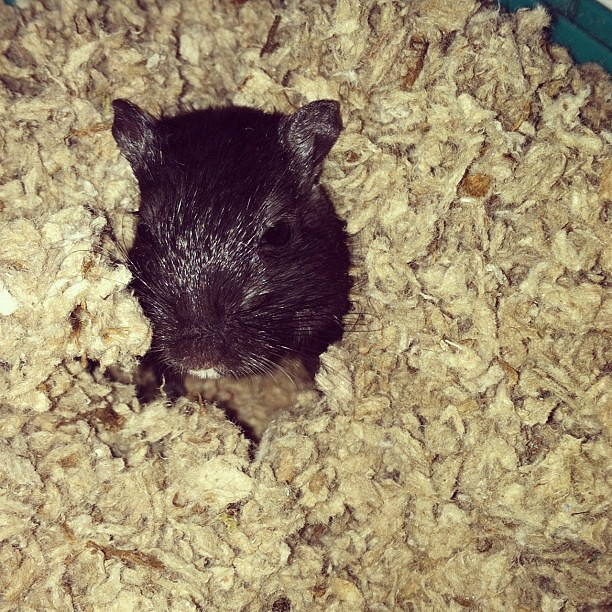 What Is The Best Bedding For Gerbils