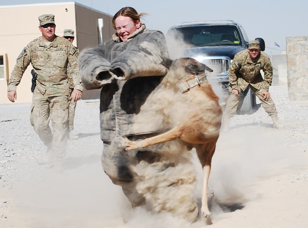 Soldier volunteers for military working dog demonstration ...