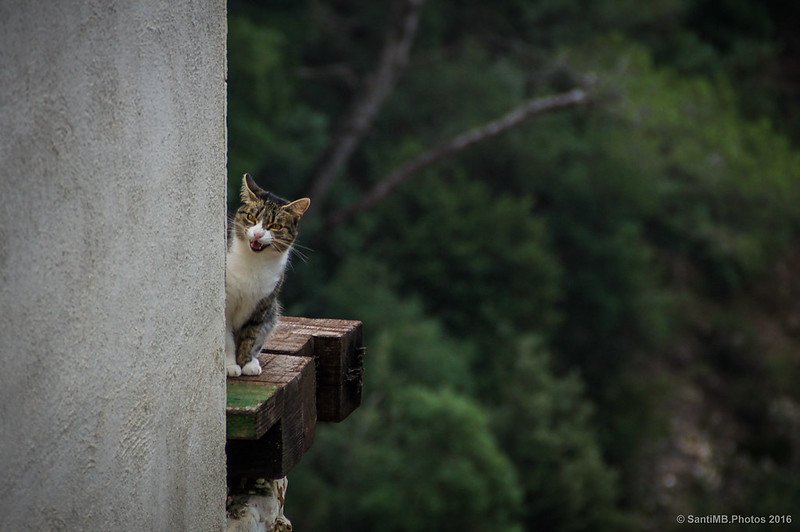Un gato excursionista en el refugio de Vicenç Barbé.