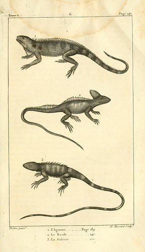 n168_w1150 | by BioDivLibrary
