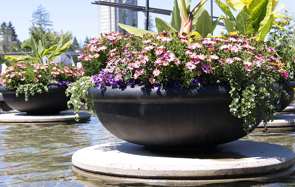 Container Garden In A Water Feature Container Gardens