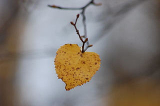 The Heart of Fall | by Rebeak