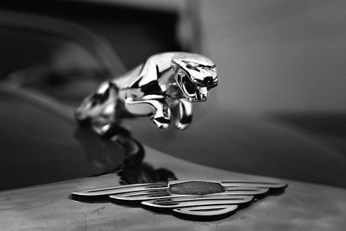 Jag | by crowt59