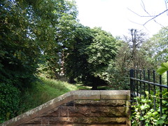 Wall and trees on Tower Road, 2016 Jul 17